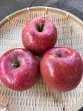 ★単品★ フジりんご~1個から買えます。~ 多少キズあり 味は同じ~