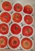 ★単品箱★今年のりんごは特においしい!蜜入り「フジりんご5kg」福島県産★予約販売★12月初旬から順次発送★全国送料無料