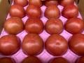 ★単品★トマト 福島県産 2個程度入り袋