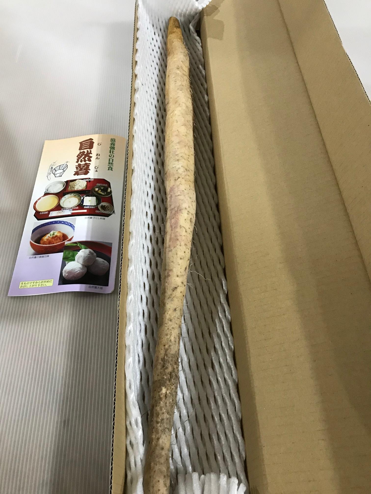日本伝統の自然健康食品「自然薯(じねんじょ)」~500g以上無地箱入 福島県二本松市産~