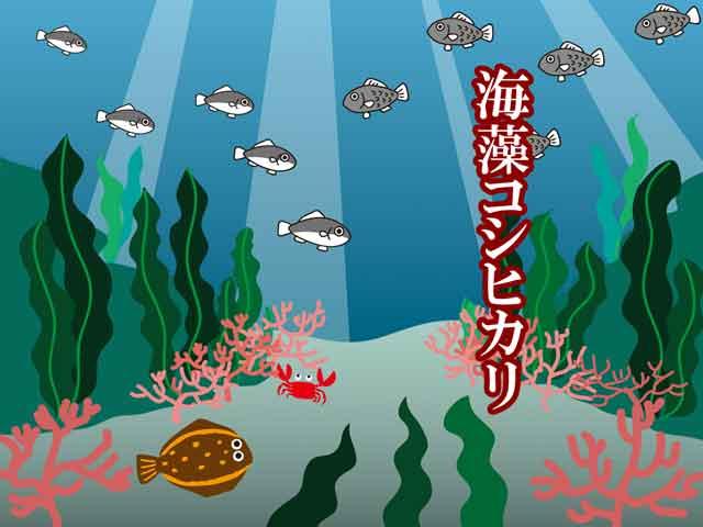 海藻コシヒカリ