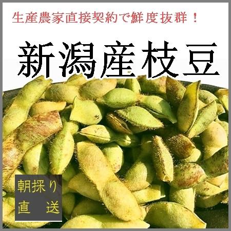 朝採り新潟産枝豆 丹波黒豆(2kg) 諸橋弥次郎農園