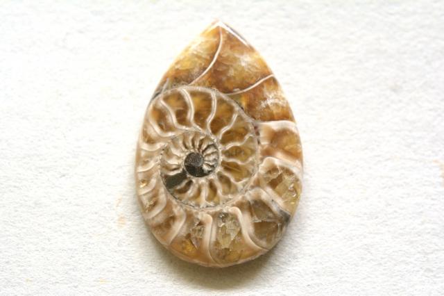 アンモナイト 化石【2】天然石ルース・カボション(31×21mm)