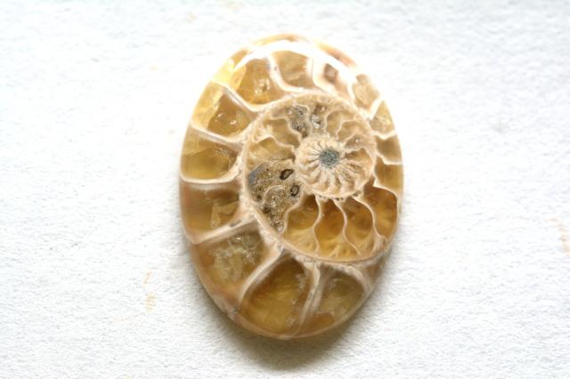 アンモナイト 化石【9】天然石ルース・カボション(23.5×16.5mm)
