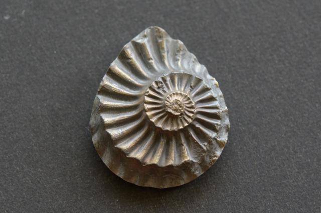 アンモナイト 化石【16】天然石ルース・カボション(23×17mm)