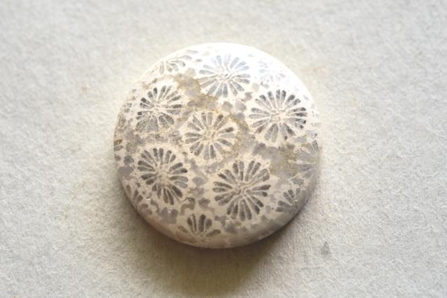 フォッシルコーラル【15】天然石ルース・カボション (31×20mm)