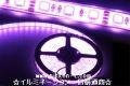 LEDテープライト、SMD5050型、パープル、300球、5m、電源別売り