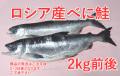 海の幸直送 得能水産 ロシア産べに鮭