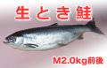 海の幸直送得能水産 生とき鮭