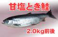 ロシア産 甘塩とき鮭 Lサイズ