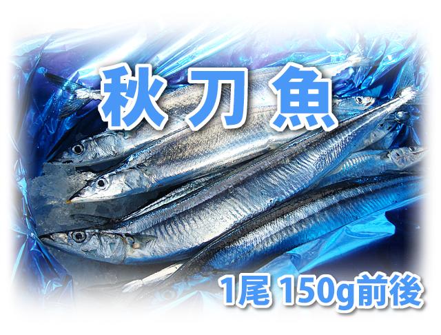 秋刀魚 1尾150g前後 10尾入り