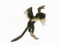 HANSA/ハンサ 恐竜のぬいぐるみ 始祖鳥 34cm
