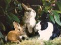 KOESEN/ケーセン 動物のぬいぐるみ/ウサギ 立ち ベージュ