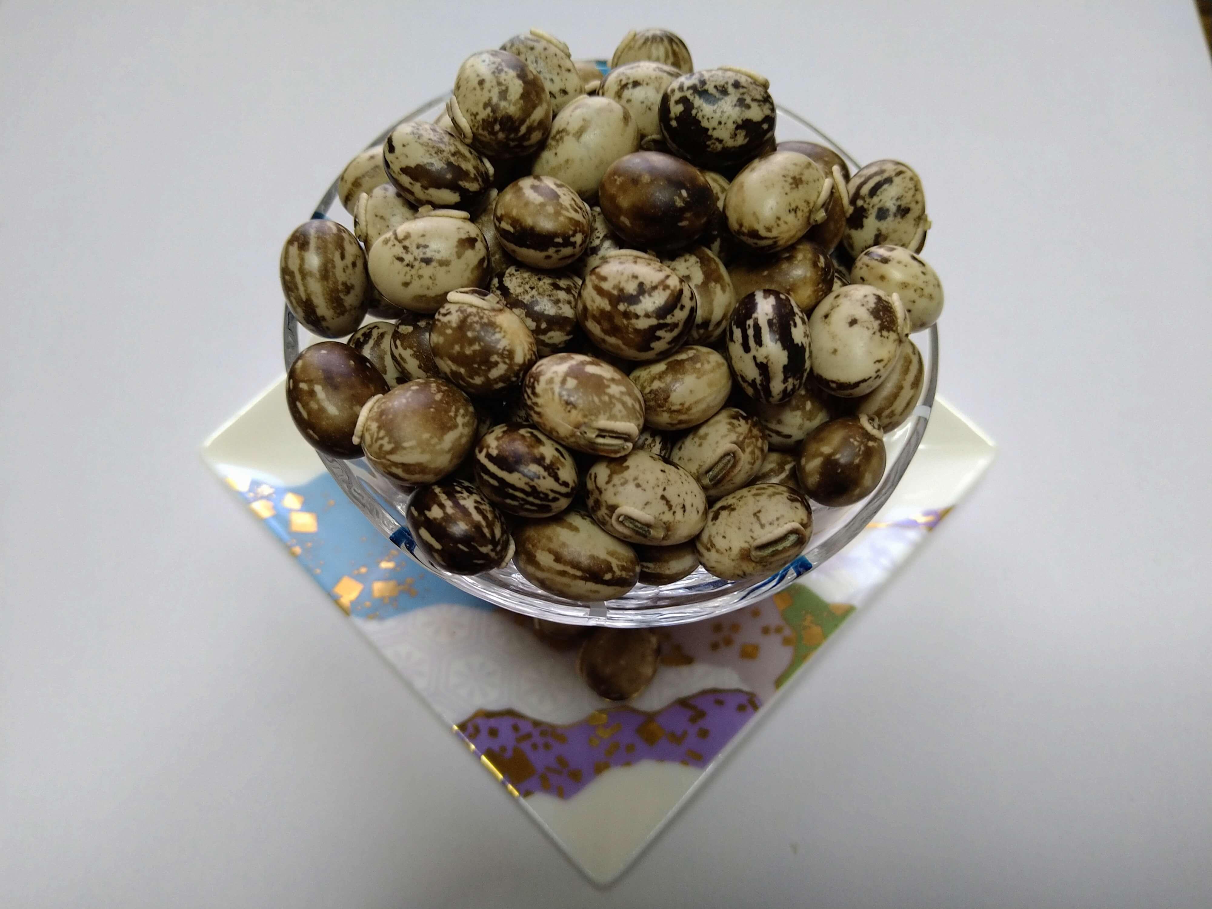 フロリダベルベットビーン生豆50粒 令和2年1月収穫の国内産    送料無料