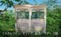 沖縄県産 モリンガパウダー(100g)2袋のセット もりもり緑茶 送料無料
