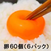【送料無料】池田なません 6パックセット