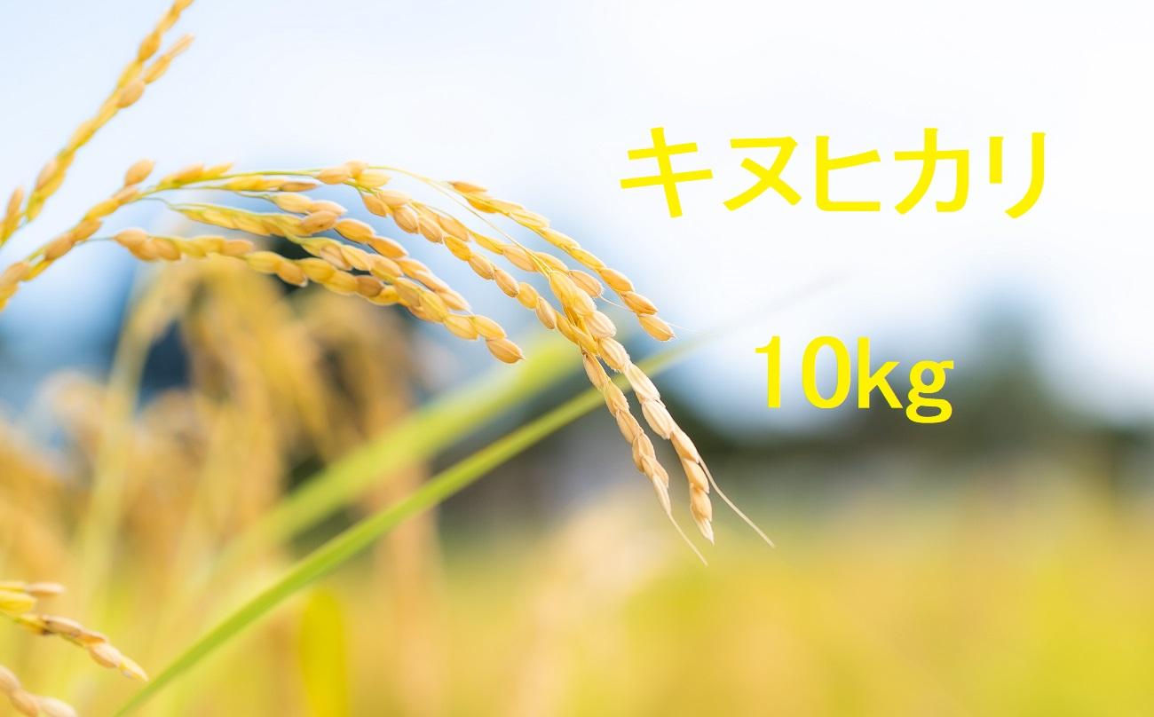 キヌヒカリ 10kg