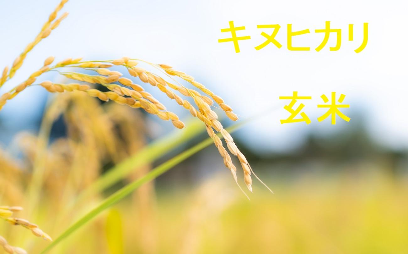 キヌヒカリ 玄米