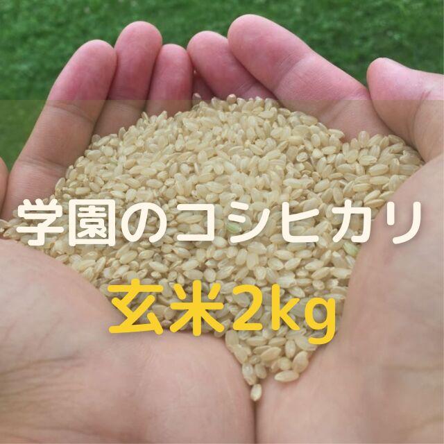 学生の作ったコシヒカリ(玄米)(2kg)令和3年産新米