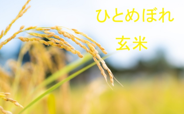 ひとめぼれ 玄米
