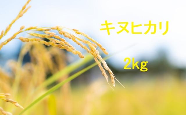 キヌヒカリ 2kg