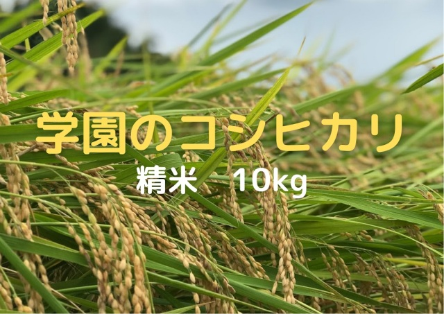 学生の作ったコシヒカリ(無洗米・白米・分搗米)(10kg)令和3年産新米