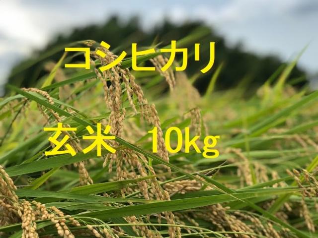 コシヒカリ 玄米 10kg