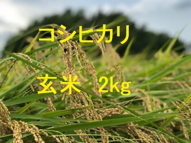 コシヒカリ 玄米 2kg