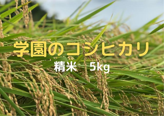 学生の作ったコシヒカリ(無洗米・白米・分搗米)(5kg)令和3年産新米