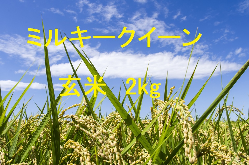 ミルキークイーン 玄米 2kg