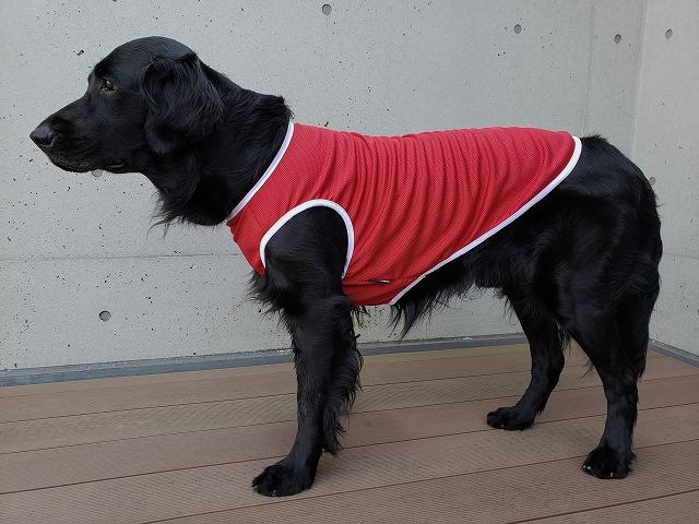 フルクール・クールタンク・犬・服
