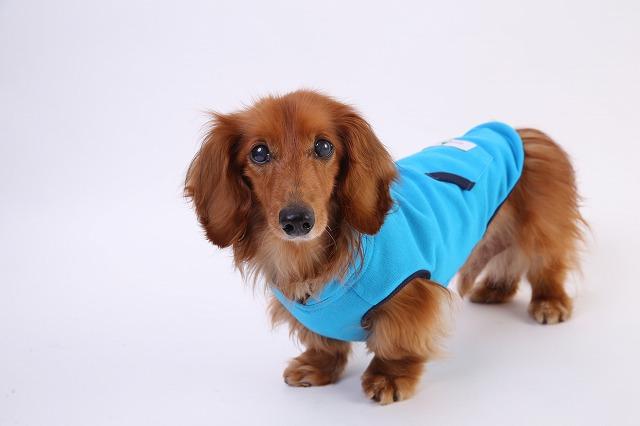 小型犬・ダックス・犬服