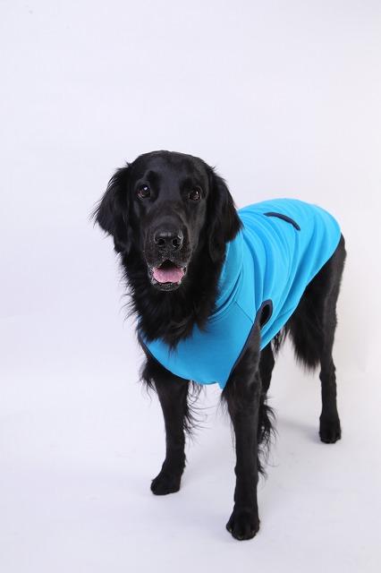大型犬・ゴールデンレトリバー・犬服