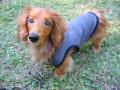 暖タンク・小型犬サイズ