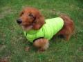 エアリーベスト・小型犬サイズ
