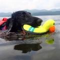 犬・おもちゃ・水に浮く・水遊び