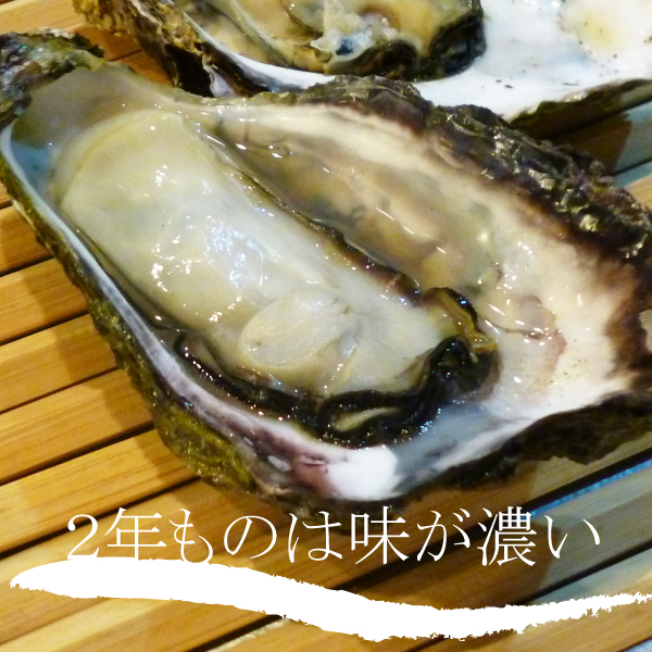 殻付き能登牡蠣半缶通販(30~35個入り)2年もの・加熱用【送料込】
