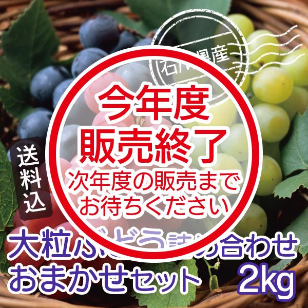 大粒ぶどう詰め合わせおまかせセット(2kg)石川県産【送料込】