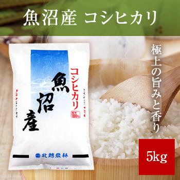 【新米】 令和元年産  魚沼産コシヒカリ5kg