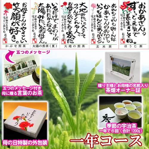 【母の日特別ギフト】茶畑オーナー権(一年コース)