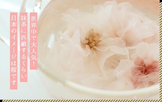 茶畑オーナーさま専用 限定販売 あまい桜茶100g