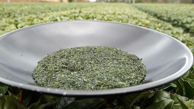 茶畑オーナーさま専用 限定販売 玉緑茶50g