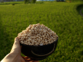 谷さんの【お米一升分】の玄米ポン菓子