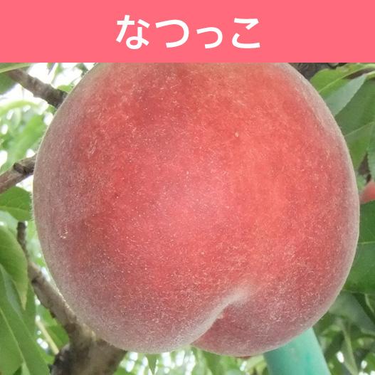 【送料込】桃 なつっこ 約3kg