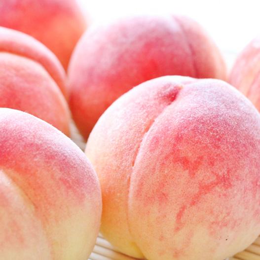 長野県産 旬の白桃 約1.8kg