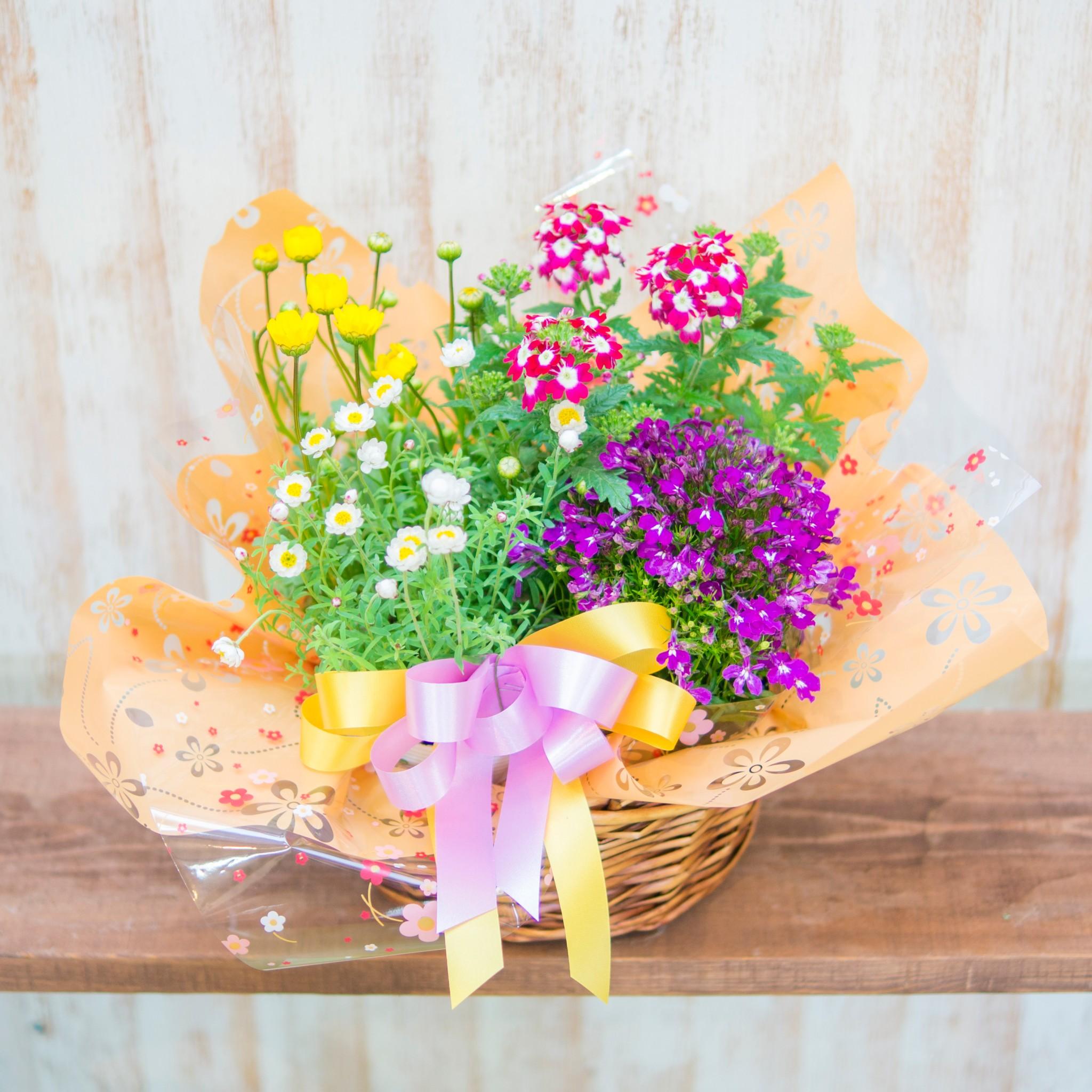 《母の日》季節の花のかご盛り (季節の花4つ)