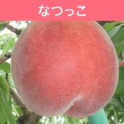 【送料込】桃 なつっこ 3kg(9~11玉入)