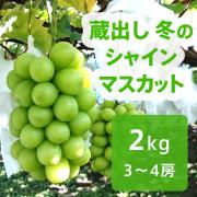 【送料込】蔵出し 冬のシャインマスカット 2kg