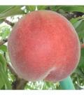【送料込】桃 なつっこ 3kg(9〜11玉入)