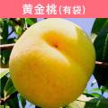 桃 黄金桃(有袋) 約3kg